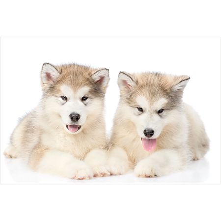 Covor copii Animals Dogs, 100% poliester,model animale, 70x140cm