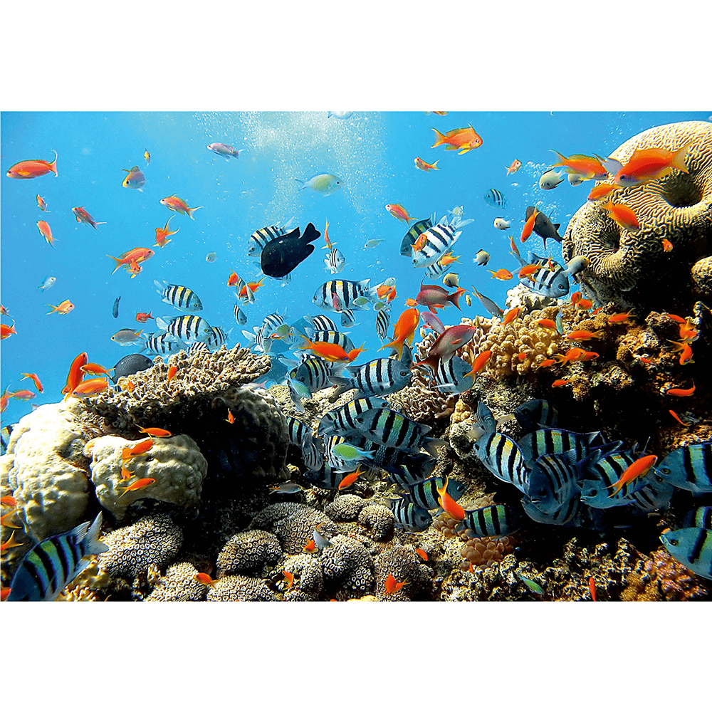 Fototapet duplex Recif de corali, 254 x 184 cm imagine MatHaus.ro