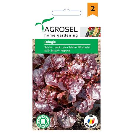 Seminte de salata creata rosie, Agrosel Odagiu