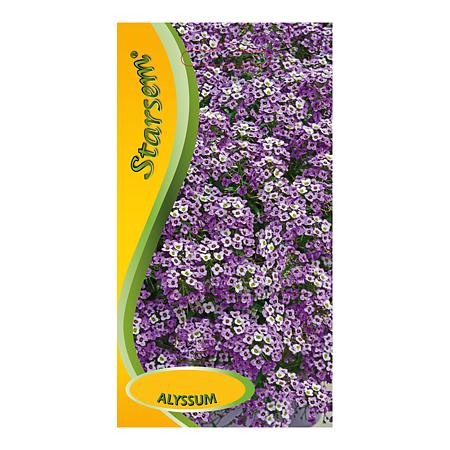 Seminte de alyssum violet, Starsem