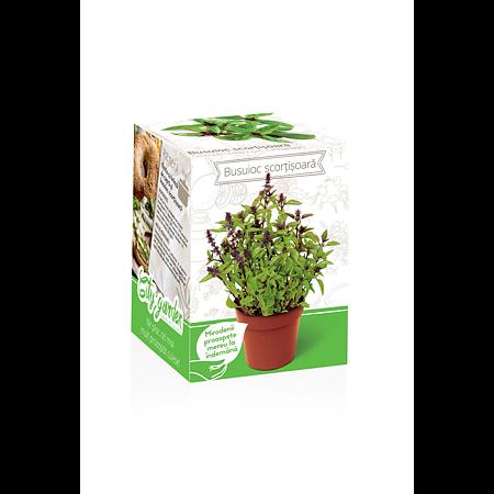 Kit busuioc cu aroma de scortisoara Yurta, plic seminte, ghiveci plastic, punguta pamant