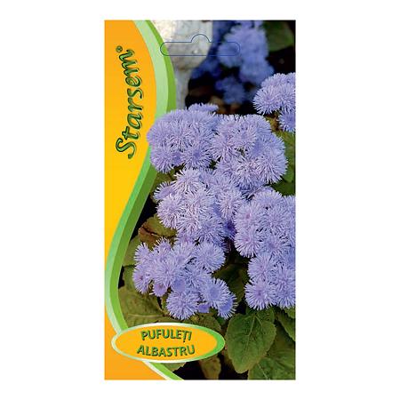 Seminte de pufuleti albastrii, Starsem
